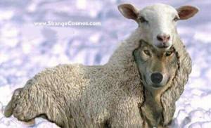 wolf-sheep-300x182